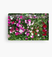 Natural background with pink flowers Canvas Print