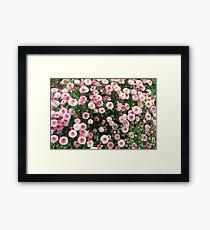 Beautiful pink flower field Framed Print