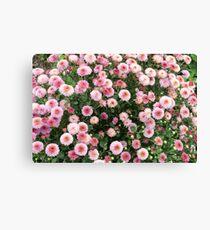 Beautiful pink flower field Canvas Print