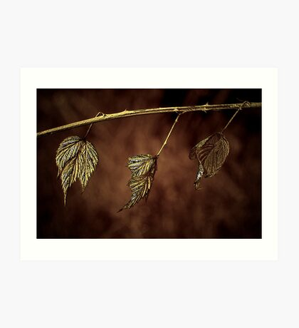 Nature's Clothes Line Art Print