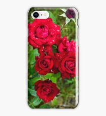 Beautiful natural roses with water drops photographed after rain  iPhone Case/Skin
