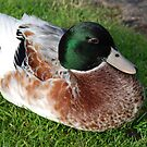 A Sitting Duck by Michael Rowley