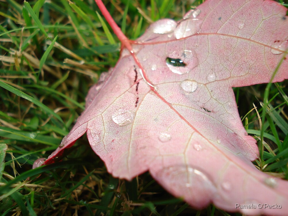Fall... by Pamela O'Pecko
