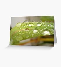 Rain Drops On Grass Greeting Card