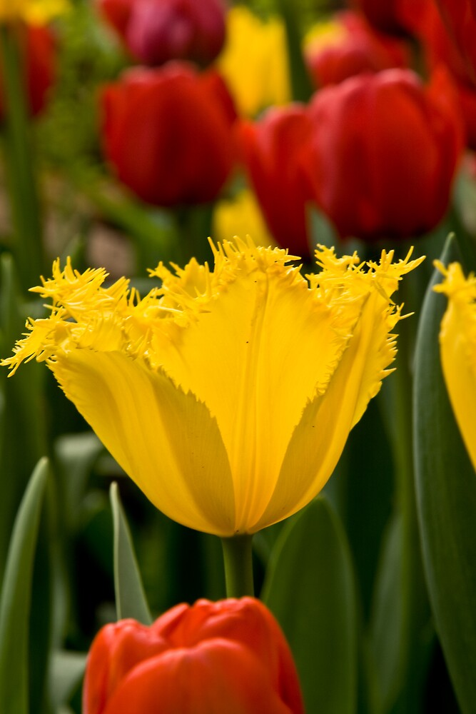 Yellow by Mark Baker