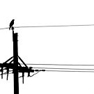 Hawk on a Telephone Pole by lindsycarranza