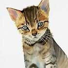 European Shorthair Kitten Watercolor Painting by namibear
