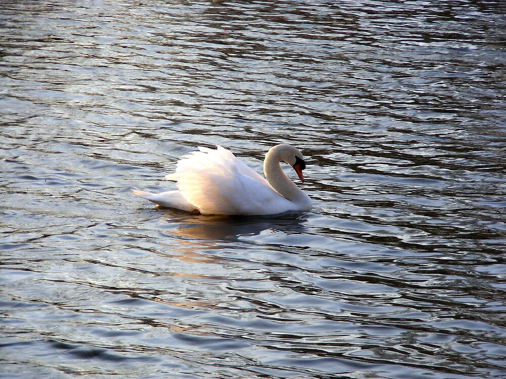 Lonely Swan by Tamara Bobst