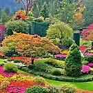 Butchart Gardens  by AnnDixon
