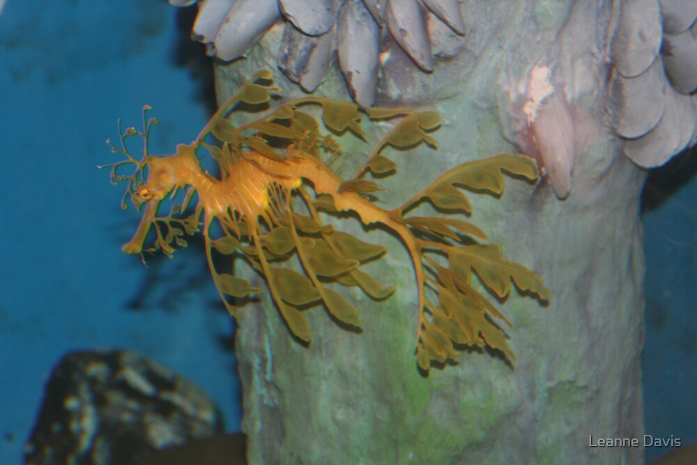 Leafy Sea Dragon by Leanne Davis