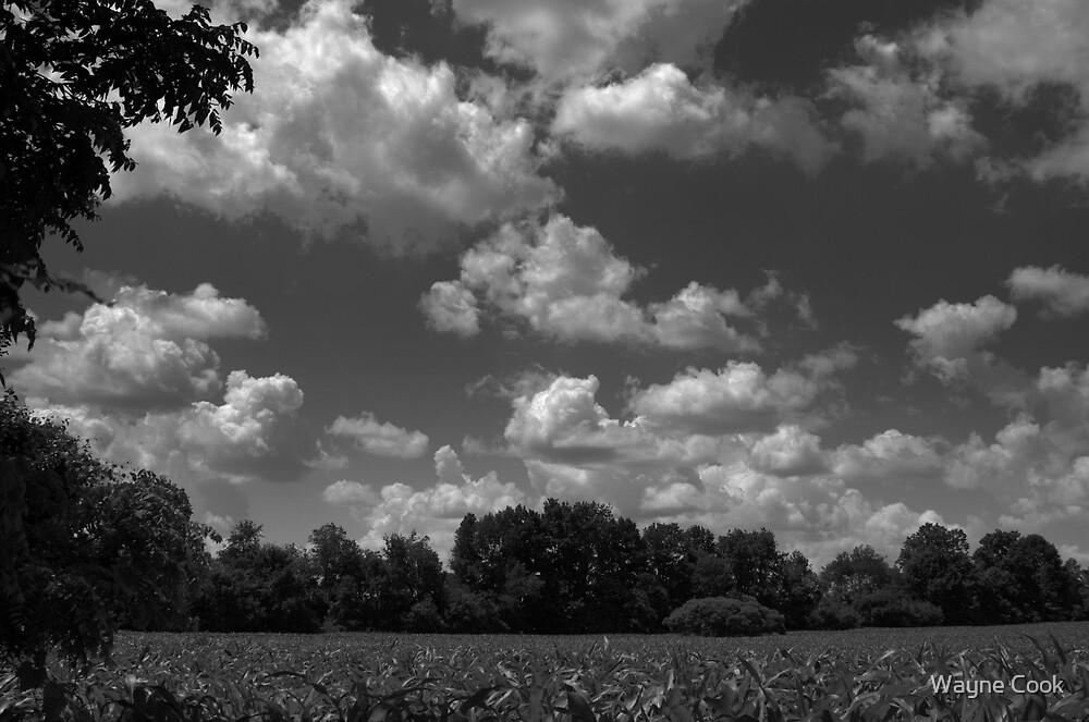 Field of Dreams by Wayne Cook