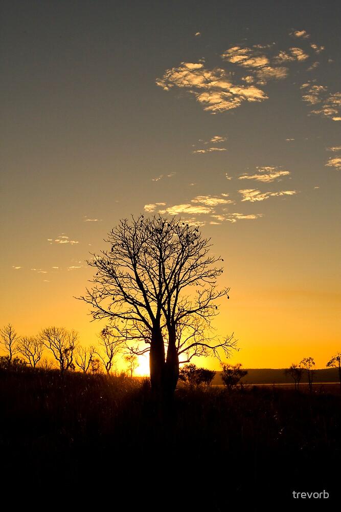 Boab tree. by trevorb