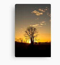 Boab tree. Canvas Print
