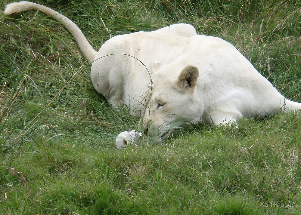 Lioness & Cub by Karl Kruger