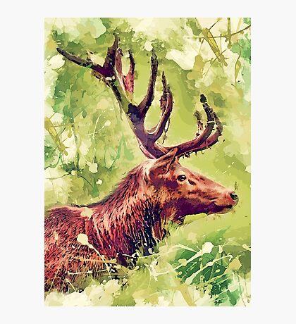 deer art #deer #animals Photographic Print