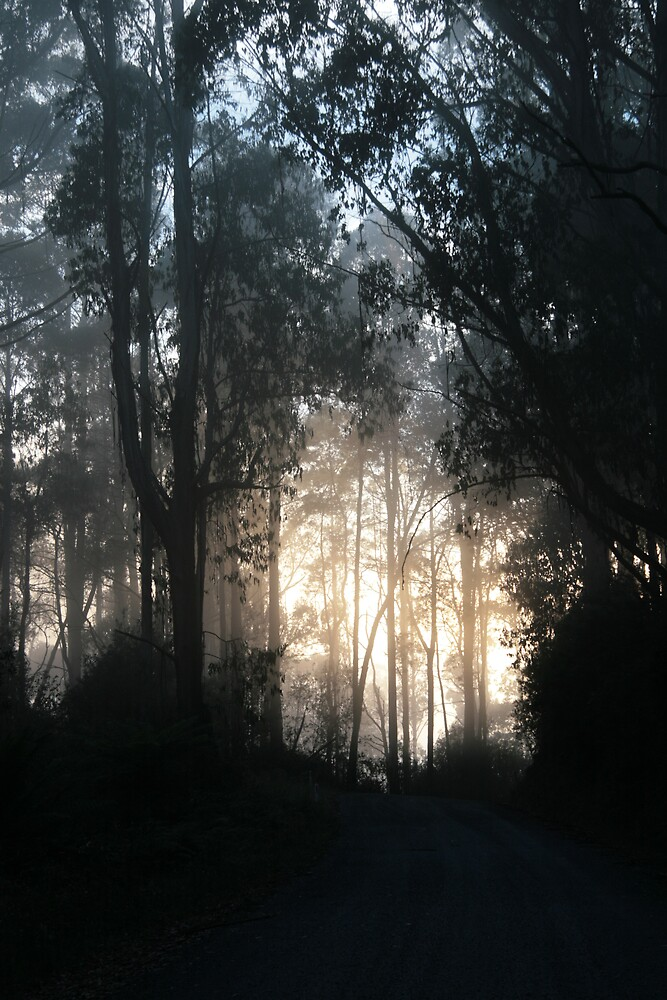 Forest in the smoke 3 by Yakmeister