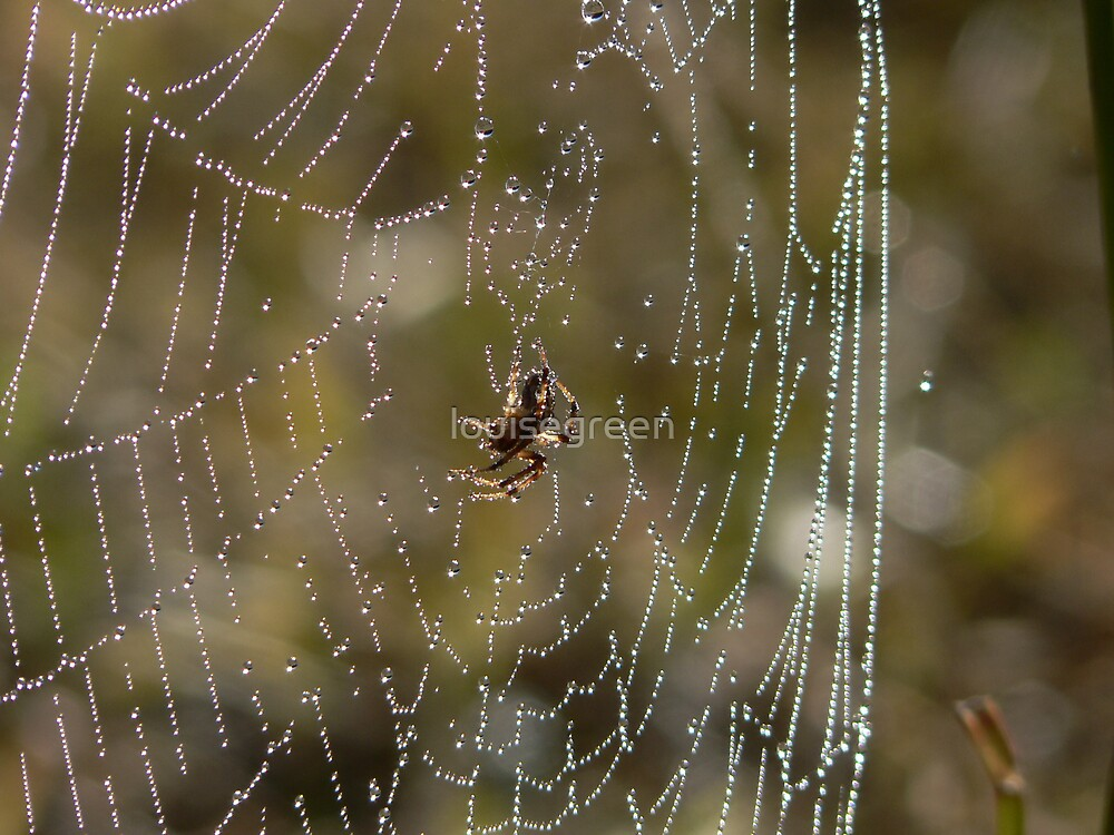 Spider Dreaming by louisegreen