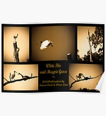 Magpie Goose and White Ibis Poster