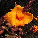 Lily In My Garden. by EmilyWinter