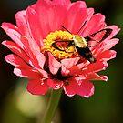 Humming Bird Moth  by Jerry  Mumma