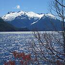 Glacier Alerces National Park by EvilGeniusBaby