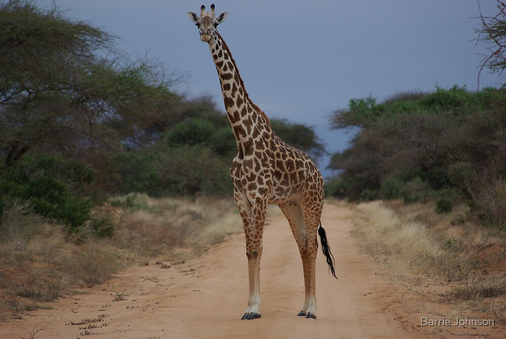 Giraffe by Barrie Johnson