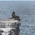 Sea Lion Galapagos islands by EvilGeniusBaby