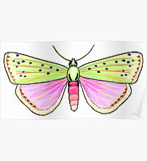 Colourful butterfly Poster