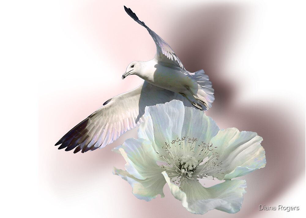 Seagull and Flower by Diana Rogers