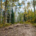 Rainbow Lake Trail #1 - Frisco, Colorado, USA by Edith Reynolds