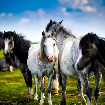 Wild horses 2 by SweetSapling