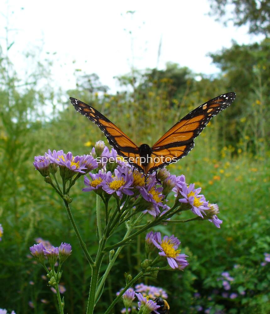 Monarch Taking Flight by spencerphotos