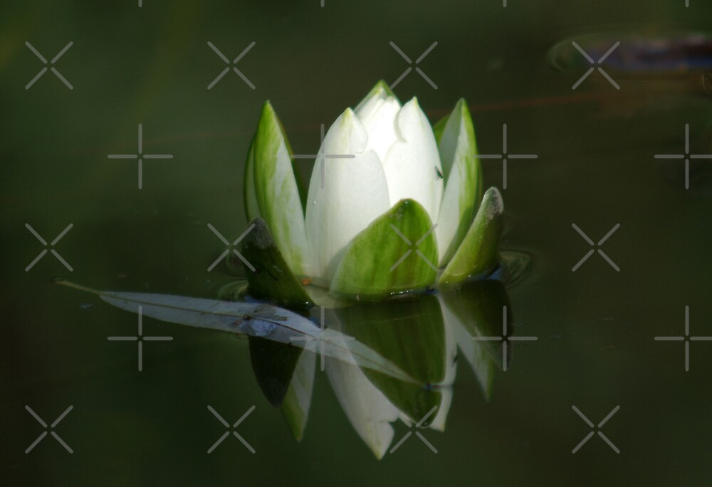 reflection by poupoune