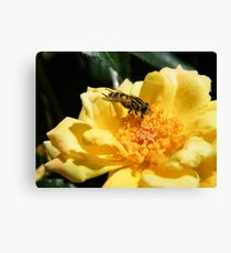 Matching insect Canvas Print