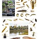 Wetland Ecosystems and Associated Animals by Dave Huth