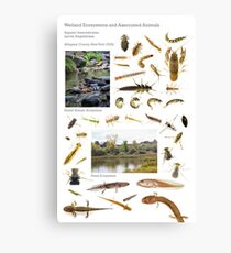 Wetland Ecosystems and Associated Animals Canvas Print