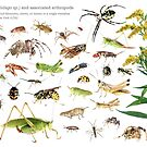 Goldenrod and Associated Arthropods by Dave Huth