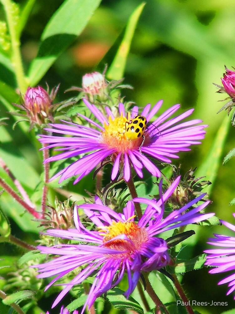 Beetle. by Paul Rees-Jones