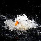 Splash! by margotk
