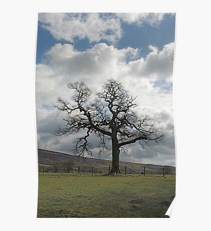 A Tree in Farndale Poster