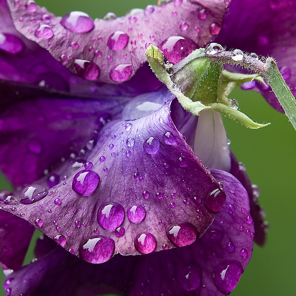 After the rain by Simon Hollingworth