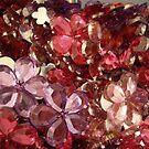 Flowers by nattyb