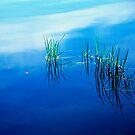 Reeds, Lake Joseph, Catskills, New York by fauselr