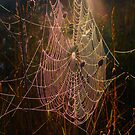 Web of Dreams by Tate6