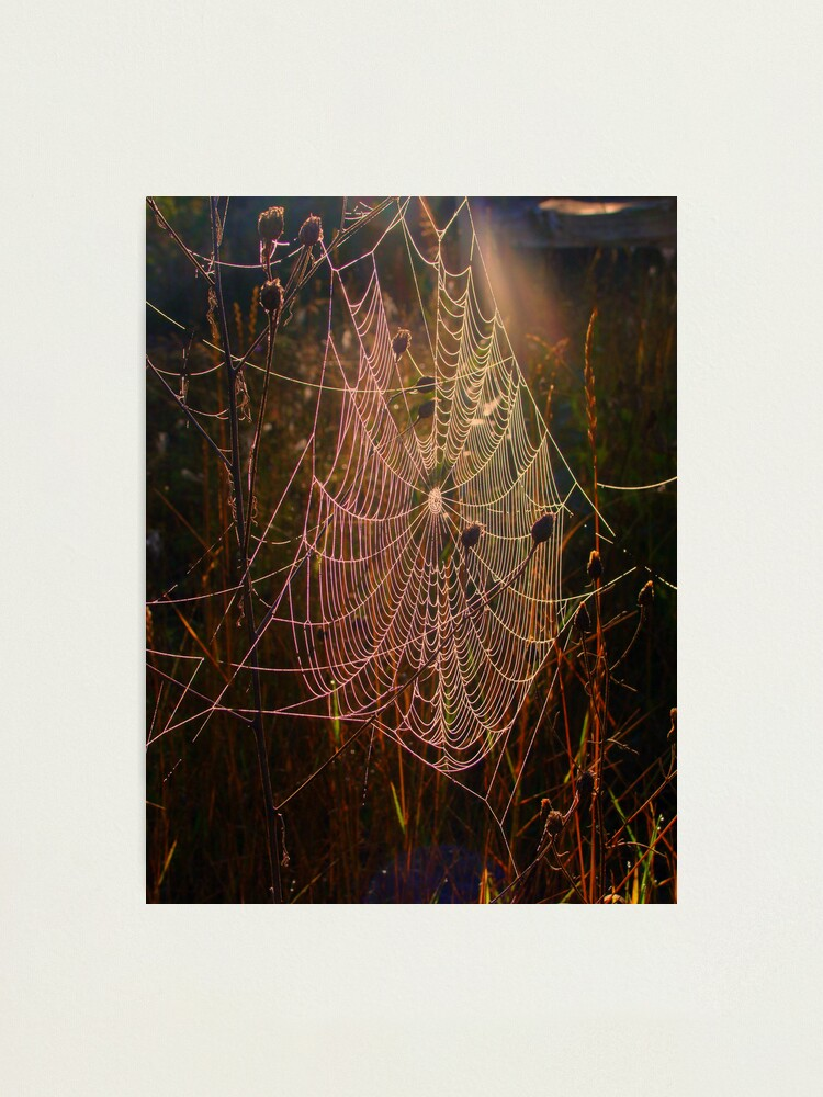 Alternate view of Web of Dreams Photographic Print