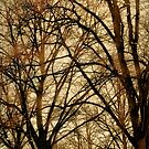 Autumn Trees No. 8 by Barry W  King