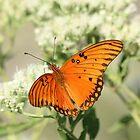 Orange Wings by Olivia Plasencia