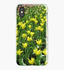 Golden Tulips - Keukenhof Gardens iPhone Case/Skin