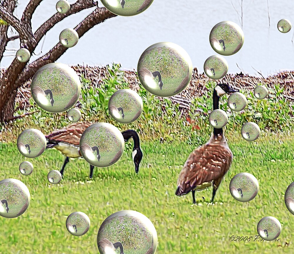 Geese by Pat Moore