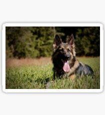 German shepherd in the field Sticker